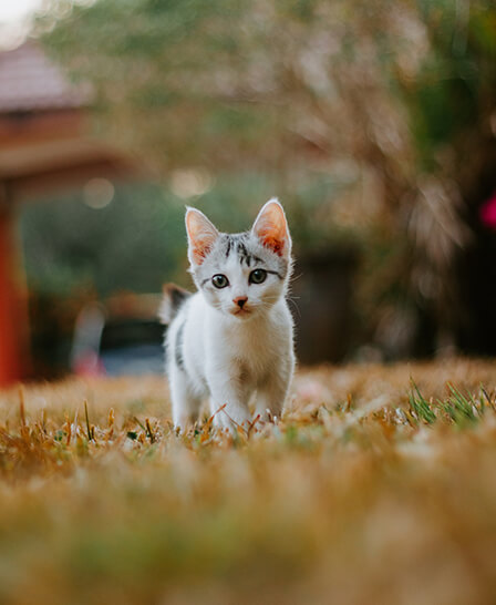 kedi kumu